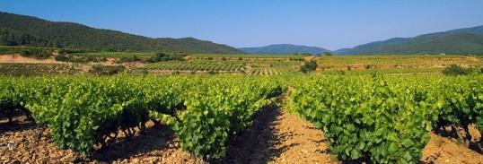 Vignes Maures.JPG