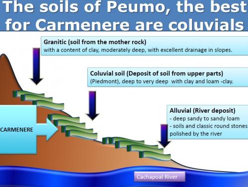 Best soils Carm.jpg