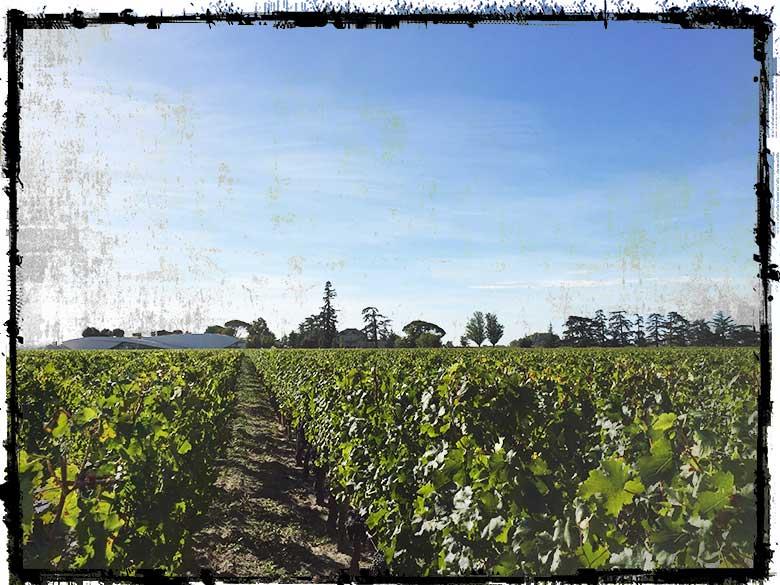 Vendanges-Cheval-Blanc-2018-8