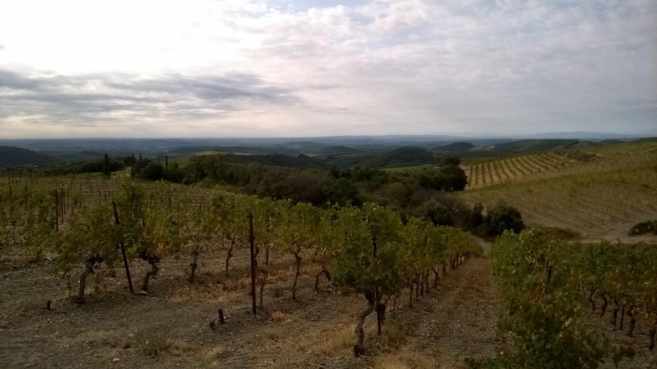 Languedoc 2018 1 (Copier)